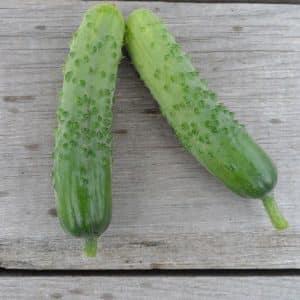 """Урожайный и неприхотливый в уходе сорт огурцов """"Пальчики"""" с отличными вкусными плодами"""