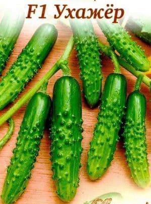 """Гибрид огурцов """"Ухажер"""", пригодный для выращивания в неблагоприятных условиях"""
