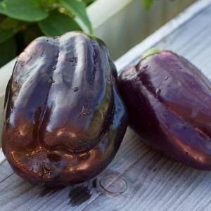 Почему перцы стали фиолетовыми: определяем причину и эффективно боремся с ней