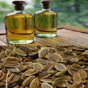 Полезные свойства семян укропа и противопоказания к их применению