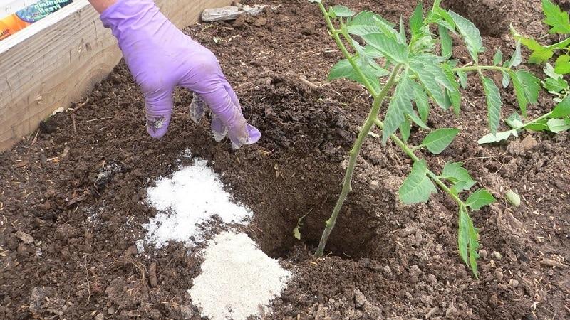 Правила подкормки помидоров в теплице: какие удобрения и когда использовать для получения богатого урожая