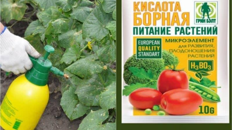 Применение борной кислоты для растений: помидоров, огурцов, перцев и других культур