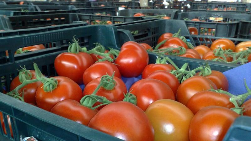 Расскажем и покажем как сохранить помидоры долго свежими: интересные лайфхаки от опытных хозяев