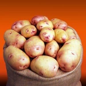 Сорт картофеля Галактика с отличным вкусом и длительным сроком хранения