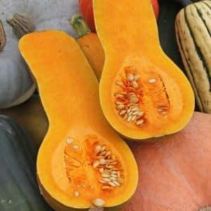 """Среднеспелый и неприхотливый мускатный сорт тыквы """"Кубанская"""": чем хорош, и как его правильно вырастить"""