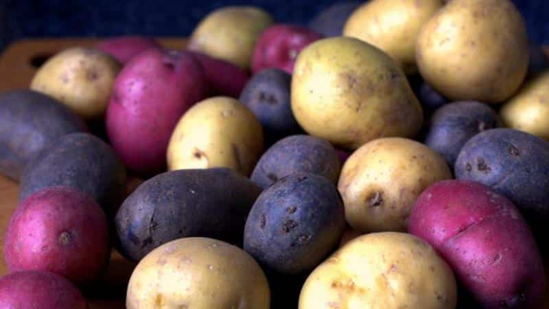 Вызывает ли картошка газообразование и почему от нее пучит живот