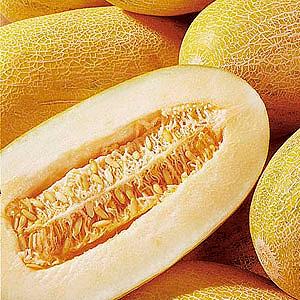 Выращиваем вкуснейший урожай самостоятельно: как растет дыня в теплице, открытом грунте и домашних условиях