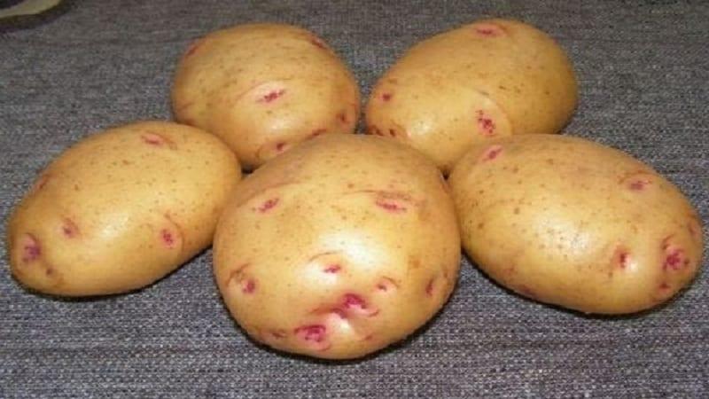 Сорт картофеля Лимонка: описание, характеристики и отзывы