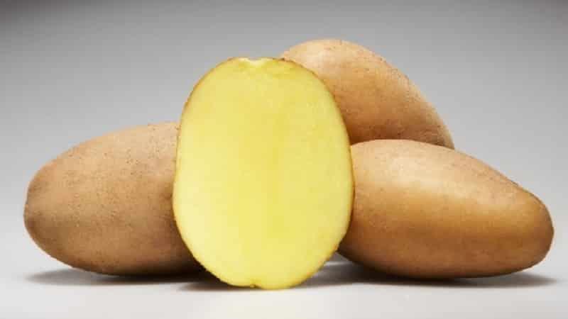 """Скороспелый и неприхотливый сорт картофеля """"Молли"""""""