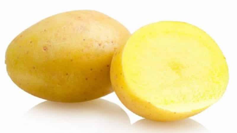 """Ранний столовый сорт картофеля, который не боится резких перепадов температур, """"Маделина"""""""