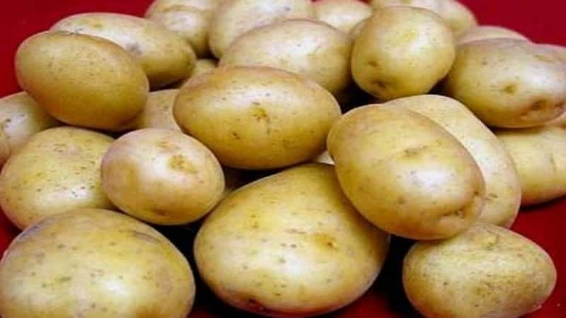 Картофель голубизна описание сорта