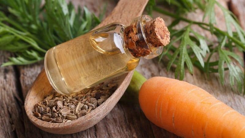 Как сделать масло из семян моркови и для чего его применяют