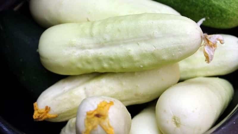 Экзотика на ваших грядках - белые огурцы: сорта, особенности выращивания и отличия от зеленых