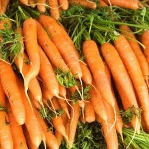 Раннеспелый гибрид моркови с отличной урожайностью: Амстердамская