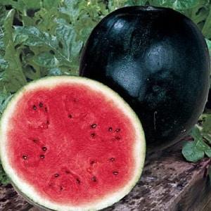 Что такое черный арбуз: описание, особенности и лучшие сорта этого вида