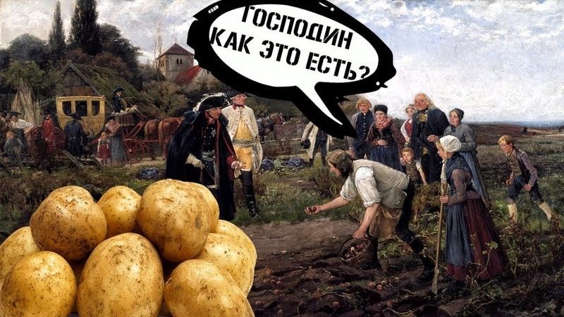 История происхождения и распространения картошки: откуда родом картофель и как он обрел свою популярность