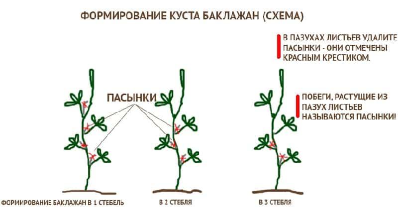 Как формировать баклажаны в теплице правильно: инструкция для начинающих огородников