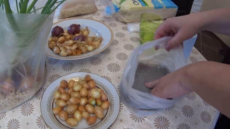 Как выращивать лук в пластиковой бутылке в домашних условиях