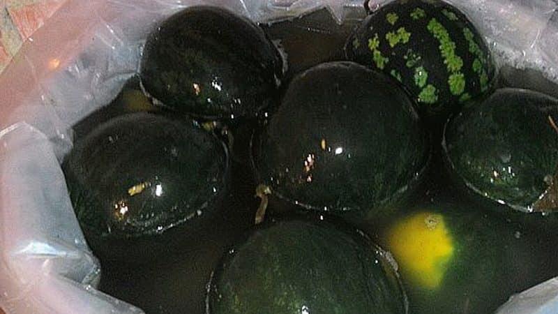 Квашеные арбузы в бочке целиком