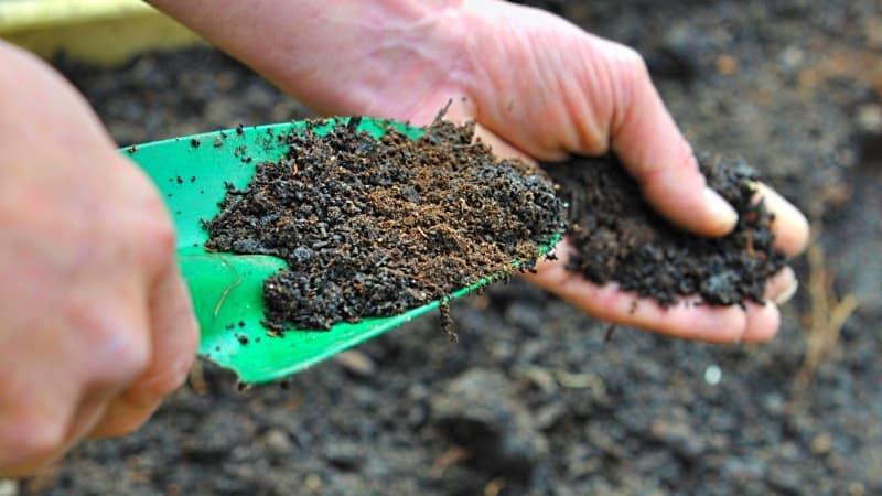 Какие удобрения вносить осенью после уборки картофеля