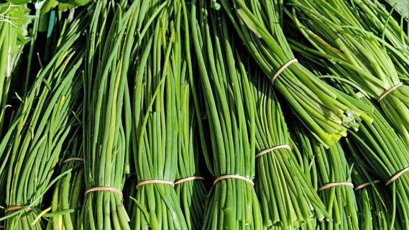Калорийность, польза и вред зеленого лука