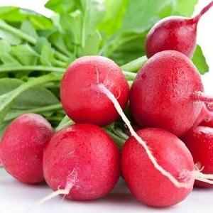Калорийность редиса и полезные свойства для организма человека