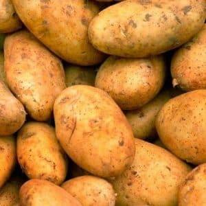 """Среднеранний сорт картофеля """"Бриз"""" от белорусских селекционеров"""