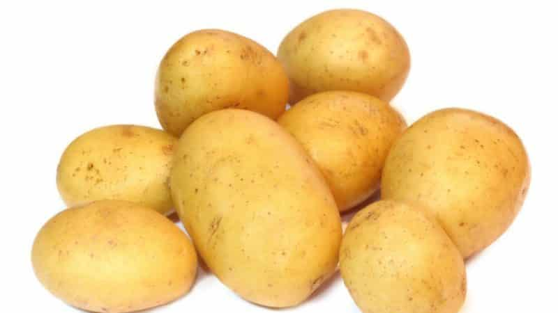 """Идеальный сорт картофеля для закупки на зиму: """"Джелли"""""""