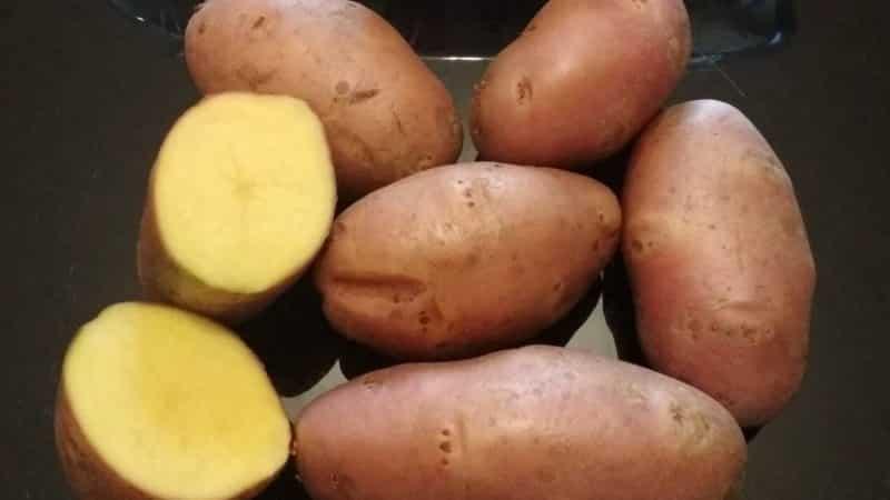 """Высокоурожайный сорт картофеля """"Эволюшен"""", способный адаптироваться к условиям любого климата"""