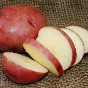 Высокоурожайный сорт картофеля {amp}quot;Роко{amp}quot;, идеально подходящий для варки и запекания