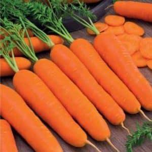 """Позднеспелая и высокоурожайная морковь """"Император"""": описание сорта"""