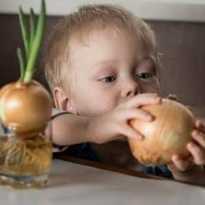 Можно ли давать лук маленькому ребенку и с какого возраста