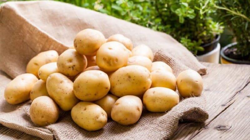 Один из самых неприхотливых сортов картофеля - {amp}quot;Лина{amp}quot;: описание урожайности и советы по выращиванию