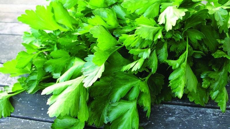 Особенности выращивания петрушки в теплице на продажу