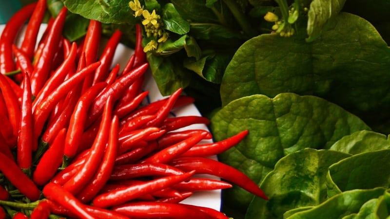 Отличаем жгучие плоды легко и просто - кайенский перец и чили: в чем разница и как их применяют