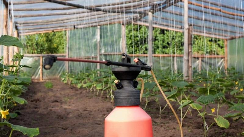 Подкармливаем огурцы в теплице для богатого урожая: схемы и рецепты