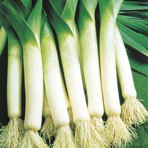 """Полезные свойства лука """"Порей"""", способы его выращивания и разновидности сортов"""