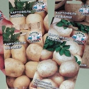 Семенной картофель как самому вырастит thumbnail