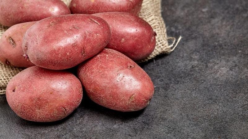 """Ранний столовый сорт картофеля """"Палац"""" от белорусских селекционеров"""