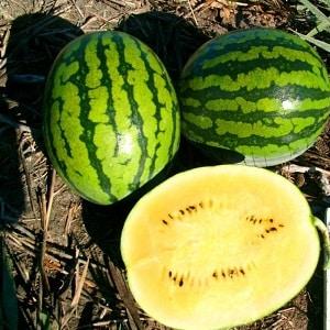 Самые вкусные сорта арбузов: описание и характеристика