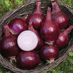 """Скороспелый сорт лука насыщенного красного оттенка - """"Ред Барон"""""""