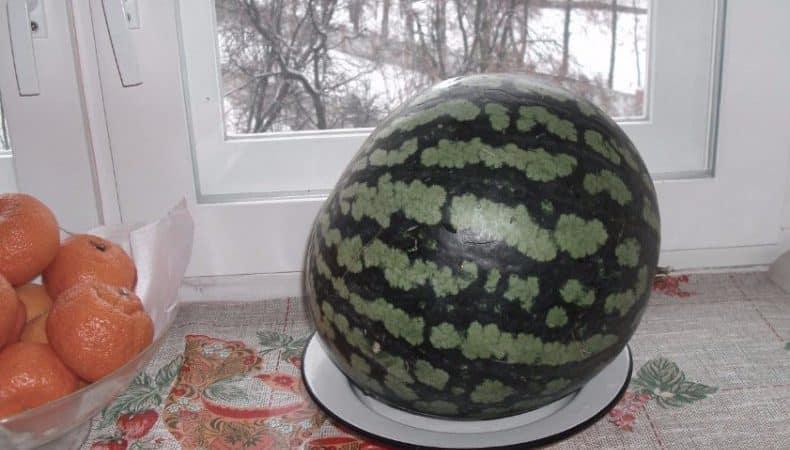 Сохраняем арбуз до Нового года в домашних условиях