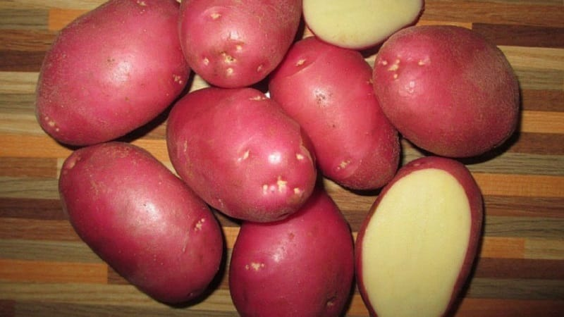 """Сорт картофеля """"Краса"""" с отличным товарным видом и прекрасным вкусом"""