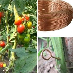Спасение медной проволокой от фитофторы на помидорах - миф или реальность: полный разбор