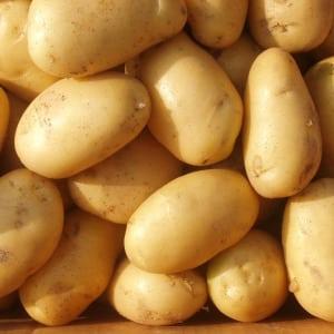 """Среднеранний высокоурожайный сорт картофеля с крепким иммунитетом """"Бельмондо"""""""
