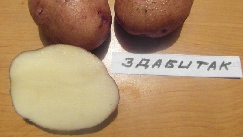"""Среднеспелый столовый сорт картофеля """"Здабытак"""" с удлиненно-овальными клубнями"""