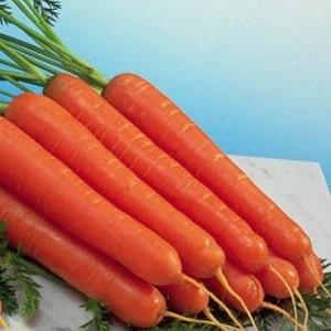 Ультраранний, неприхотливый гибрид моркови Наполи f1