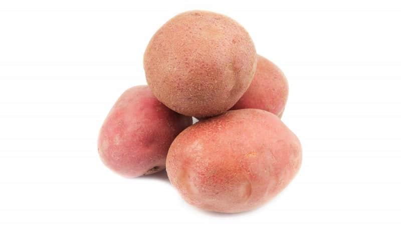 """Высокоурожайный сорт картофеля """"Ермак"""" с розоватой кожурой"""