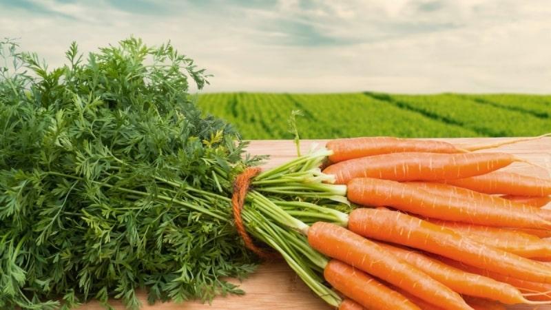 Сколько нужно съесть морковки, чтобы улучшить зрение и какие витамины в составе