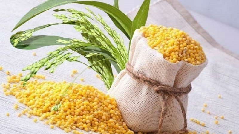 В чем разница между пшеном и пшеницей и как применять их в кулинарии
